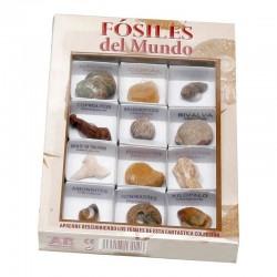 Caja de Fósiles del Mundo 2